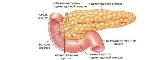 Диета для поджелудочной железы: что можно и нельзя?