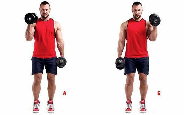 Упражнения на бицепс и трицепс в тренажерном зале