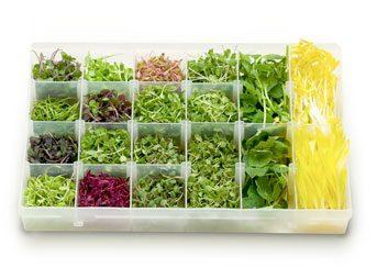 Что такое микрогрин в кулинарии?