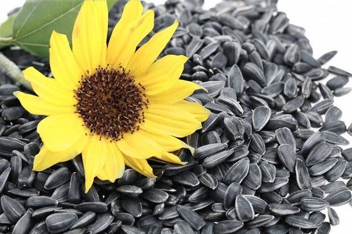 Сколько калорий в семечках подсолнуха жареных 100 гр